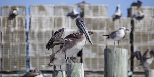 2020 Cedar Key Seabird Rescue Workshop