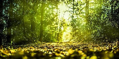 Symbiose et coopération pour une forêt résiliente billets