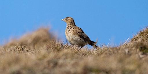 Breeding Birds Survey