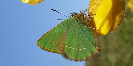 Butterfly survey: green hairstreak tickets