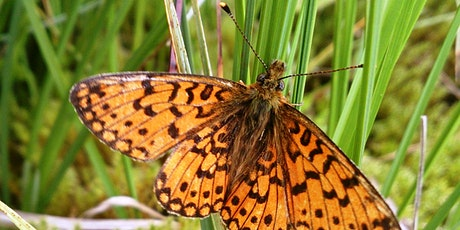 Butterfly survey: small pearl-bordered fritillary tickets