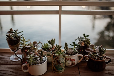 Succulent Building Workshop at Charm City Books!