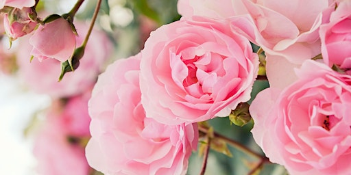 Free Class: Growing Roses