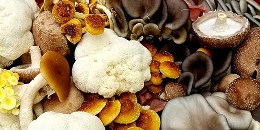 Free Cooking Class: Vegan Healing Local Mushrooms