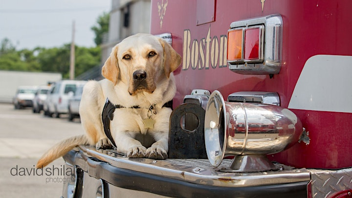Support MA Police & Fire Dogs in Honor of One Boston Day image