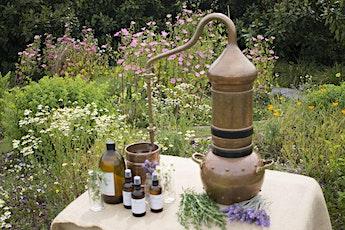 Botanical Distillation Workshop tickets