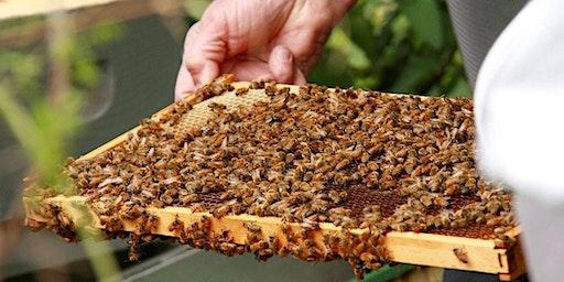 Beginning Beekeeping: The Basics and Mid-Season Colony Health