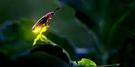 Fireflies in Utah?! tickets