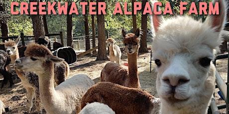Alpaca Summerfest 2020 tickets