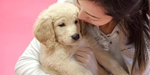 VALENTINE'S DAY DOG MINI SESSIONS