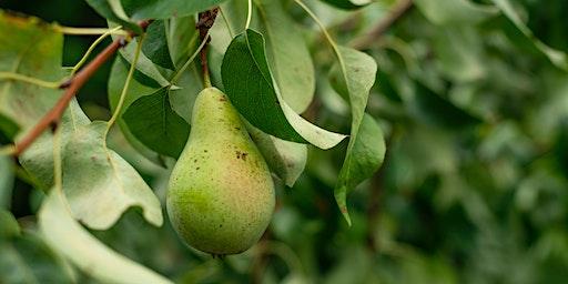 Tending Your Fruit Trees