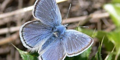 Strawberry Hill Butterfly Habitat Restoration Project tickets