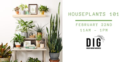 Houseplants 101 (including houseplant and kit!)