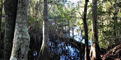 FNPS Pine Lily Field Trip Osceola School Reedy Creek Swamp Site - February 22, 2020 tickets
