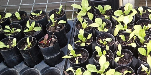 Help the Bushfire Recovery: Grow Plants for Garden Revival