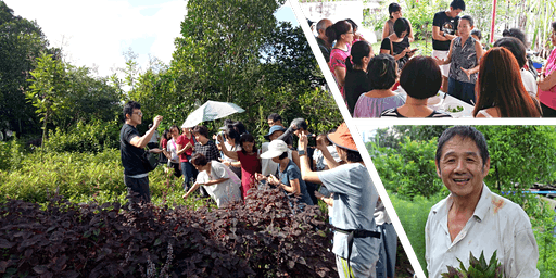 本土草药学习游 | 南大芳草园 NTU Community Herb Garden