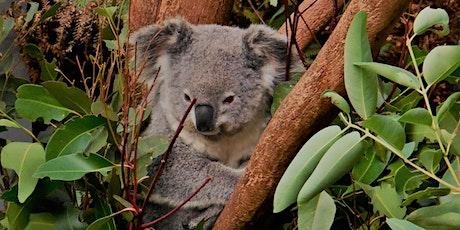 Yin Yang - Australia Bushfire Relief & Recovery tickets