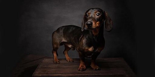 Dog Photography Masterclass with Gary Hill