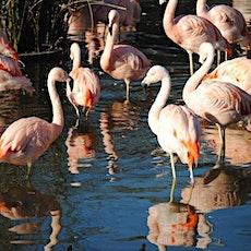 Temaikèn Zoo: Entrance & Transport from Buenos Aires entradas