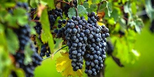 Saint-Émilion Village: Half-Day Wine Tour from Bordeaux