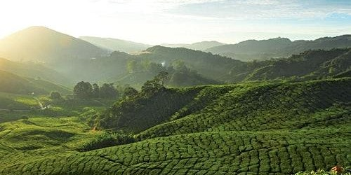 Cameron Highlands: Guided Day Tour from Kuala Lumpur