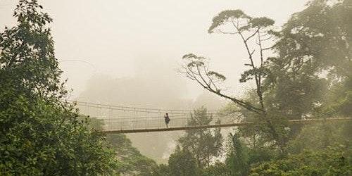 Mistico Hanging Bridges Walk