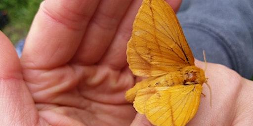 Moth Morning at Glenarm