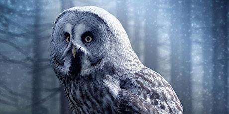 Owl Evenings tickets