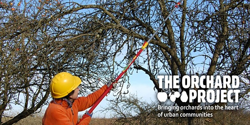Pruning for older, neglected and imperfect fruit trees - West Yorkshire