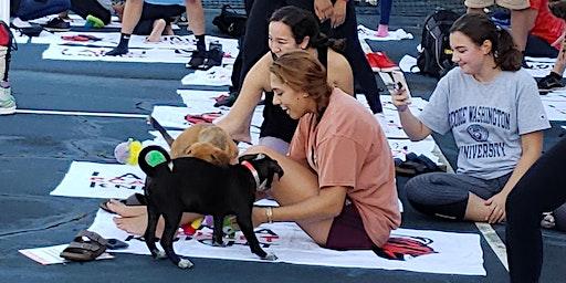 Doggy Noses & Yoga Poses - Downward Dogs at Stockton U.!