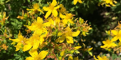 UK Organic Herb Growers Spring Meeting 2020