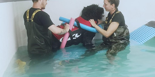 The Retreat Veterinary Rehab - Open Event, Swansea