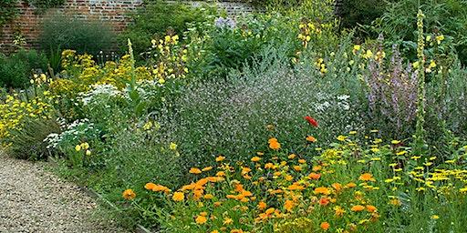 Planning Your Medicinal Garden