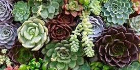 Create an indoor Succulent Garden