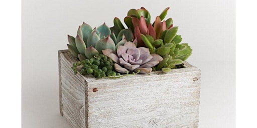Burgers, Brews, and Spring Time Succulents - A Floral Arranging Class