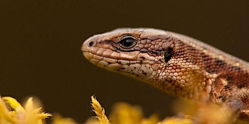Reptiles- Ecology & Survey