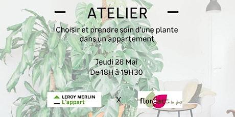 Choisir et prendre soin d'une plante dans un appartement billets