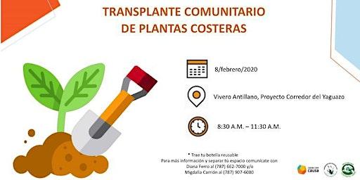 Transplante Comunitario de Plantas Costeras