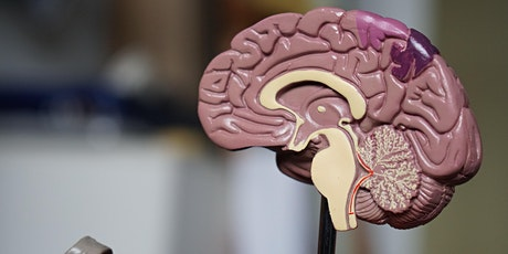 Marijuana and the Developing Brain tickets