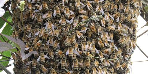A Bee Evening with the KY State Apiarist (Beekeeper), Dr. Tammy Horn Potter