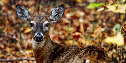 Presentation on Chronic Wasting Disease in North America