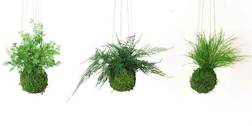 KOKODAMA 101: A HANGING-PLANT CLASS