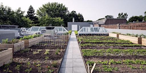 Growing Food in the City: 4-Part Workshop Series