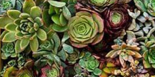 CHOICE Succulents with planter or garden stones PREORDER BY FEB 1