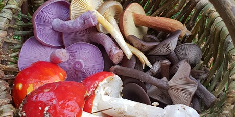 Fungi Forage and  Feasting (Ashdown Forest, Forest Row) tickets