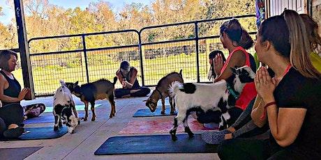 Goat Yoga Lakeland! tickets