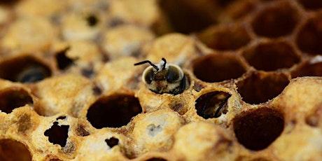 Cata de mieles y casa de las abejas entradas