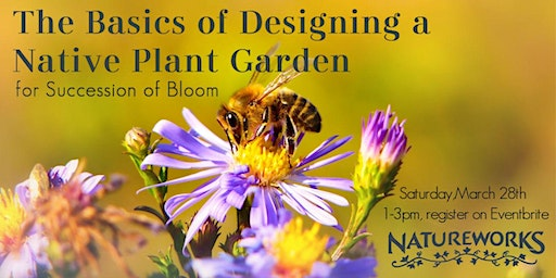 The Basics of Designing a Native Plant Garden for Succession of Bloom