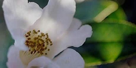 Camellia Garden Volunteer Workparty tickets