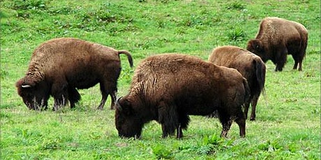 White Crown Sparrow Habitat Restoration at the Bison Paddock tickets
